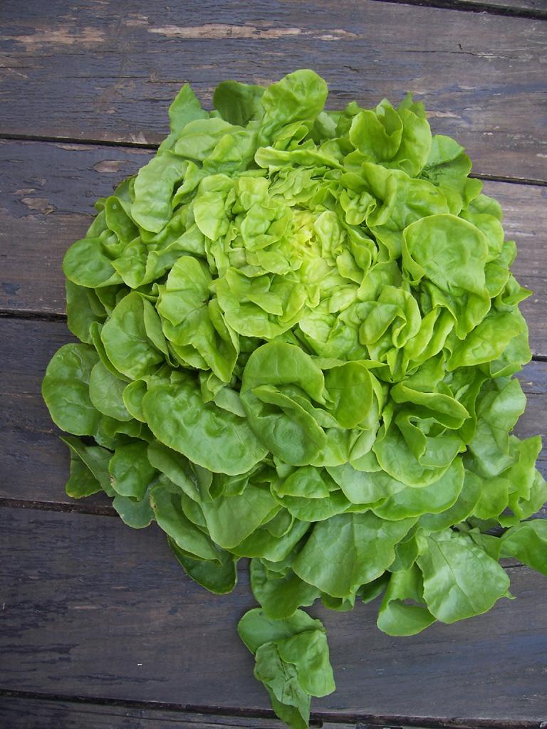 Astuces tres utiles a vos tabliers et en cuisine le for Eliminer les vers des salades